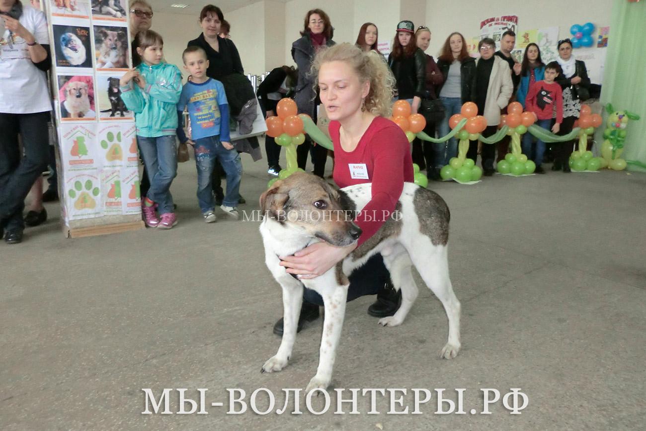 Дефиле собак приютов Щербинка и Руднево, выставка Дорога к Дому, 26 апреля 2015