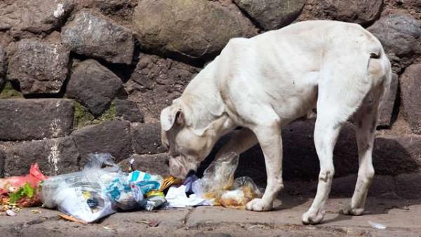 Массовое отравление собак в центре Москвы