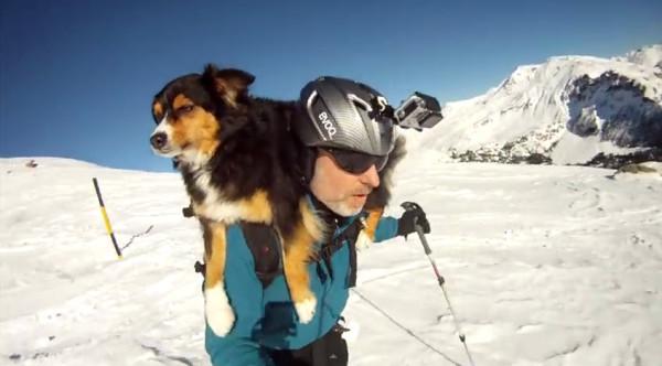 Отважный Пес — горнолыжник, видео