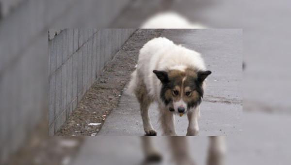18 апреля 2015 — спасем собак от живодеров, митинг в Гайд-парке !