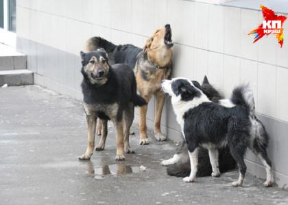 Отравители бездомных собак