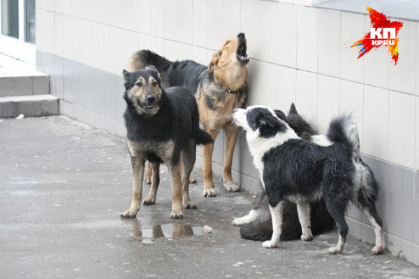 Запрещена деятельность фирме, травившей бездомных собак ядом