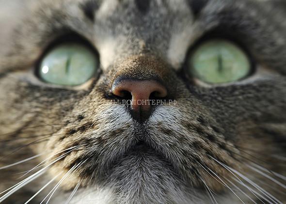 Inscrutable cat.