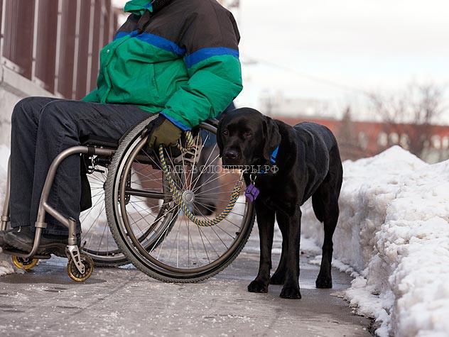 117195550-service-dog-vs-therapy-dog-632x475