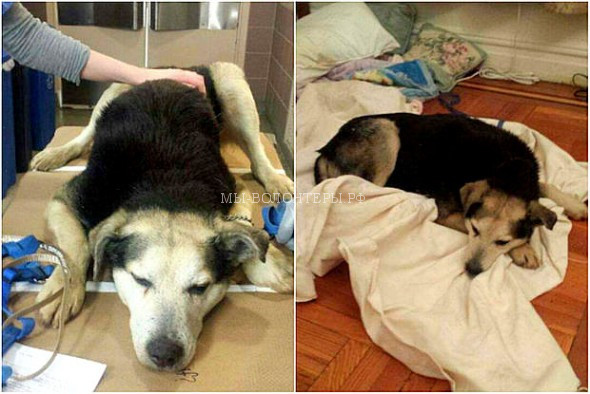 2.19.15-Woman-Sleeps-in-NYC-Park-to-Save-Senior-Feral-Dog5-590x394