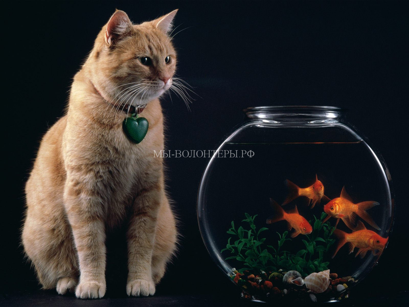 Cats019