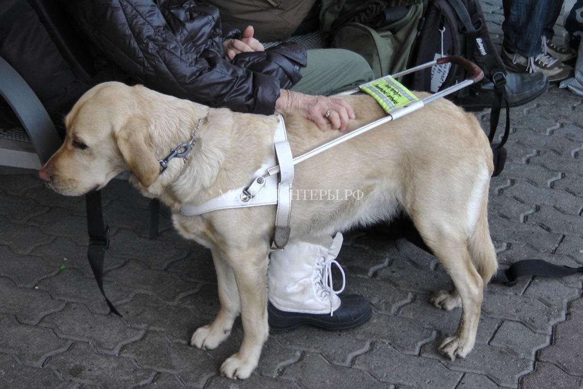 Service_Dog_in_Oslo_2013