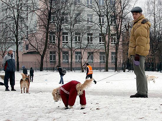 Москва: планируется  ввести генотипическую регистрацию домашних животных
