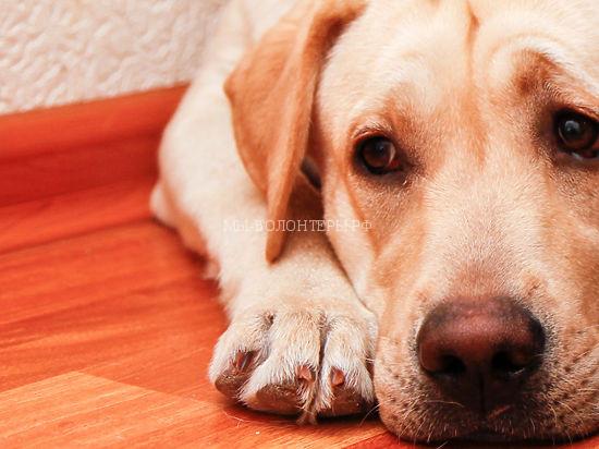 Собак в подмосковном приюте могли отравить радикальные зоозащитники