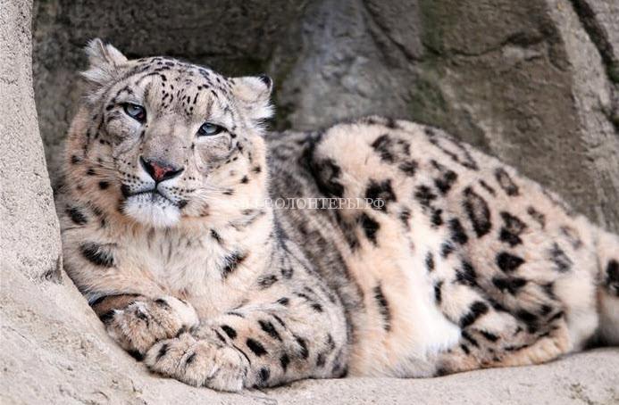 Сайты с объявлениями о продаже диких животных нужно блокировать