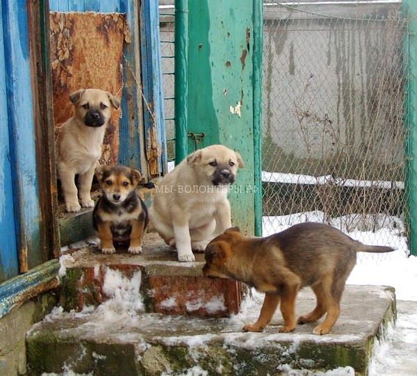 Волонтеры Витебска — как они помогают бездомным животным