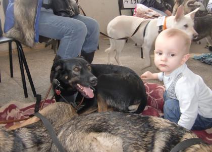 Берем из приюта взрослую собаку