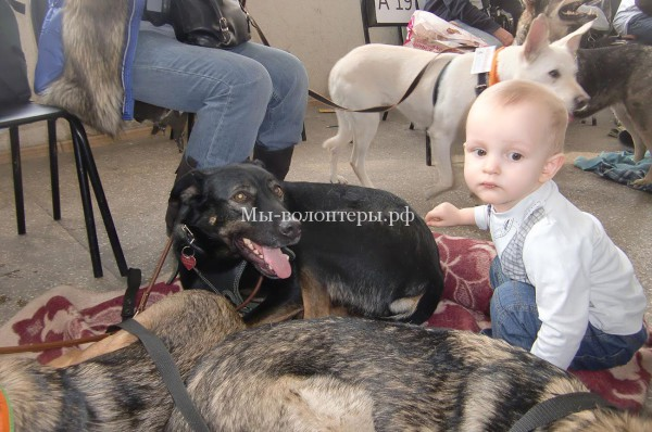 Почему  из приюта лучше взять взрослую собаку, а не щенка
