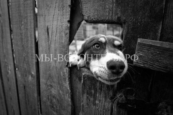 Выставка бездомных животных «Надо брать!»