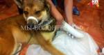 В Екатеринбурге производят искусственные лапы для собак-инвалидов