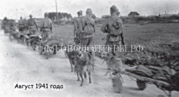 Ездовые и санитарные собаки в Великой Отечественной войне