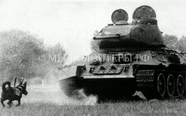 Собаки  - истребители танков , в Великой отечественной войне