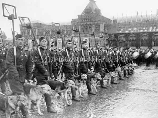 собаки-на-параде-победы-1945-год