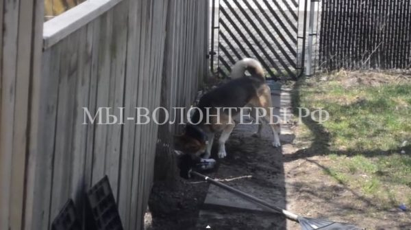 ВИДЕО: как 2 собаки друг к другу подкоп делали
