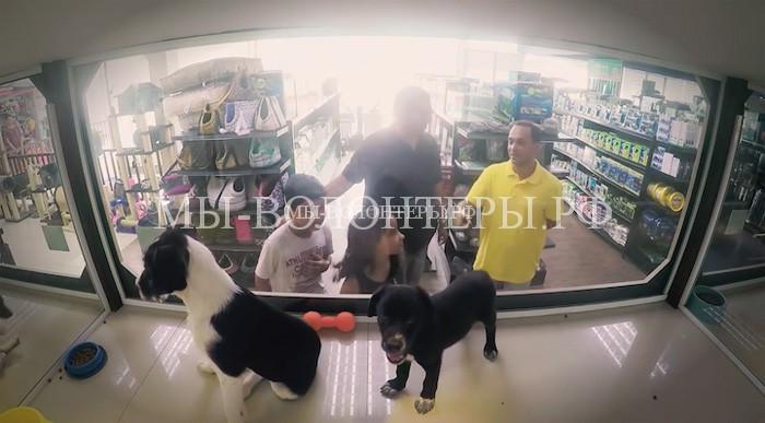Социальный эксперимент, собаки и кошки из приюта в зоомагазине