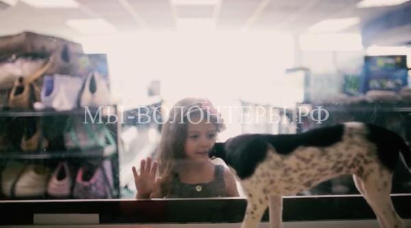 Бездомных животных разместили в зоомагазине — чудный социальный эксперимент