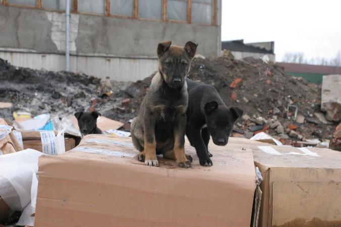 В Татарстане жители требуют создать в «Народном контроле» графу о бездомных животных