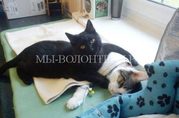 Как кот помогал выхаживать животных