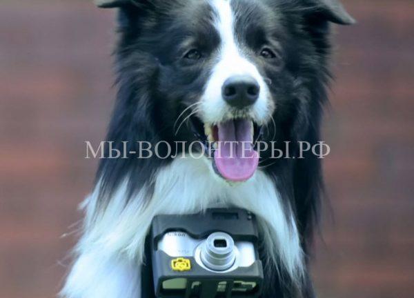 Забавная идея: хозяин настроил камеру своей собаки на срабатывание, когда пса что-то приводит в волнение