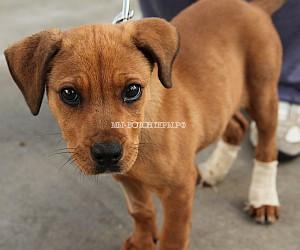 Сообщество Save-A-Dog Scheme (SADS)