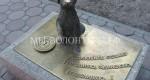 Санкт-Петербург — 10 лет Концепции отношения к бездомным животным