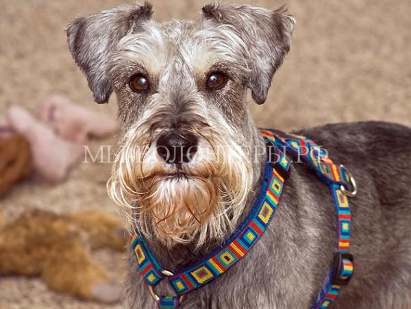 18 интересных фактов о собаках
