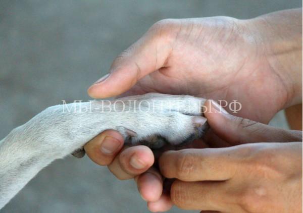 Как обращаться со своей собакой