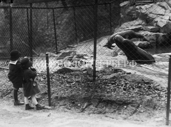 Как выглядели первые зоопарки мира