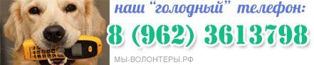 DONATION_MAKET_ФОРМЫ