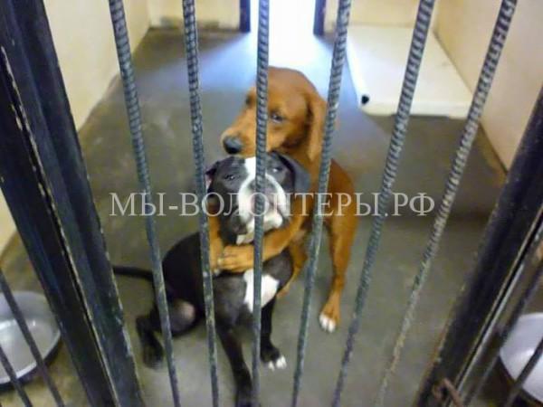 Двух собак спасли от усыпления в самый последний момент