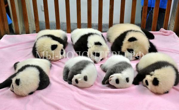 Детский сад для панд