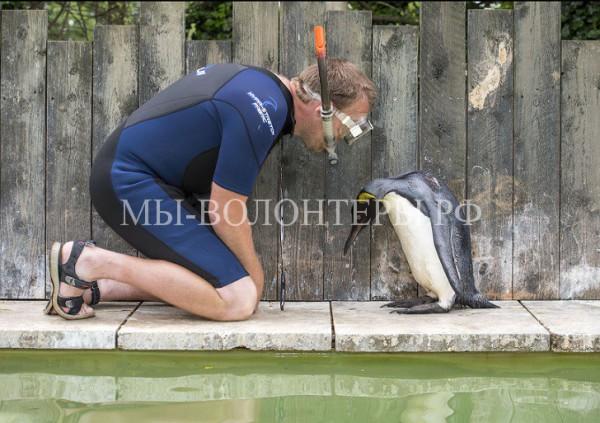 Пингвин Шарлотта берет уроки плавания