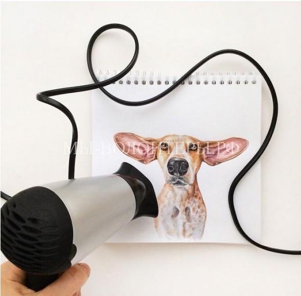 Акварельные «интерактивные иллюстрации» с собаками