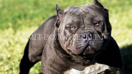 Породы собак, требующие особенно серьезной дрессировки и воспитания