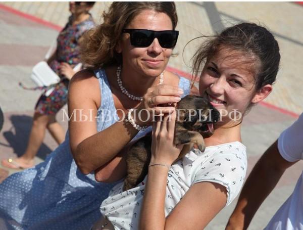 В Керчи девушка спасла восьмерых щенят