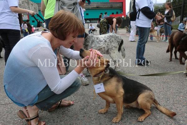 Выставка бездомных животных «Надо брать! Летом!» , 11 июля 2015 — краткий фотоотчет