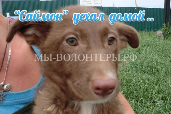 Щенок «Саймон» нашел хозяина, 15 августа 2015