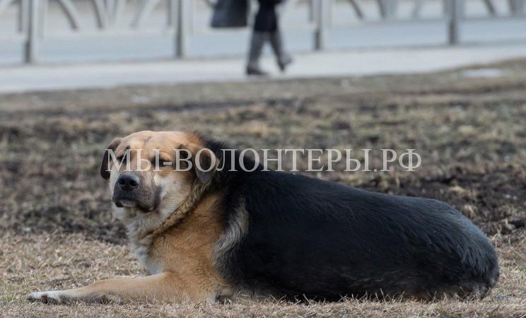 Свердловская область впервые выделит 35 млн.руб. на отлов бродячих животных