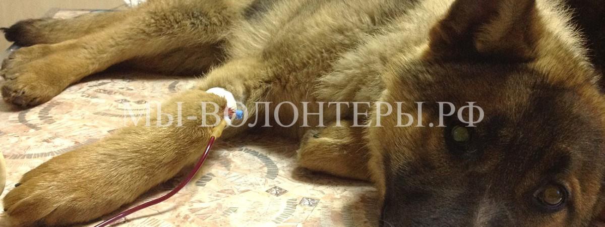 «Собак на органы !» Актуальное интервью Д.Г.Матюхина, руководителя УК приюта Щербинка