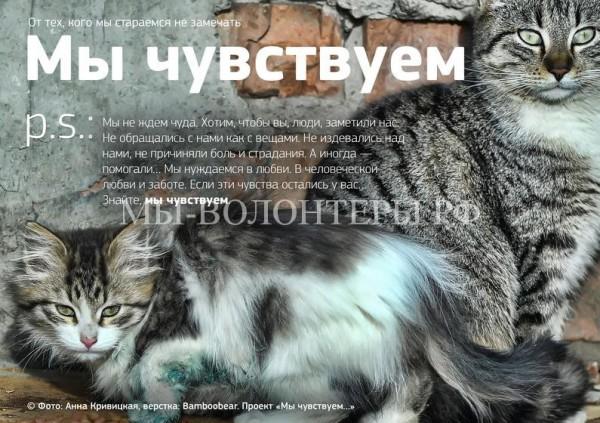 «Мы чувствуем»- проект о бездомных животных, который заставит задуматься каждого