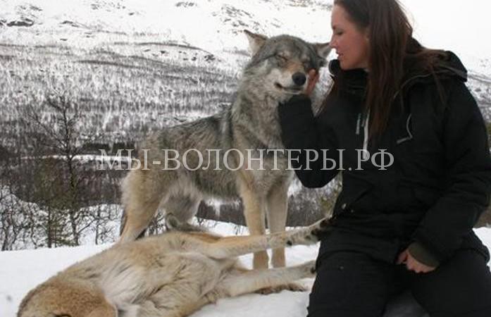Удивительный парк, где можно обнять волка