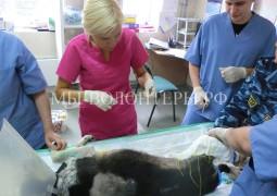 Трехцветный Арчи - циничное отравление изониазидом,  история болезни и смерти Арчи