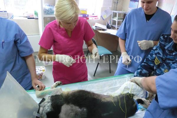 Будни клиники приюта Щербинка — история болезни собаки «Кусанный»