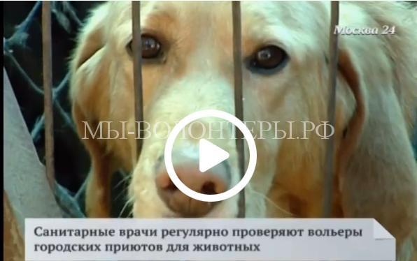 Приют в Царицыно для бездомных животных может оказаться в центре скандала
