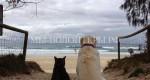По мнению ученых древние собаки вымерли из-за кошек